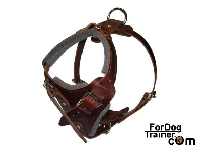 dog agitation harness